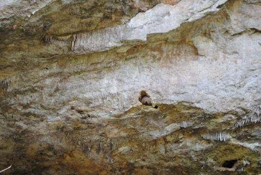 Caverna da Gruta do Sumidouro- Campo Formoso