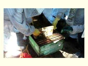 Projeto inibe a prática de extermínio de abelhas em Juazeiro