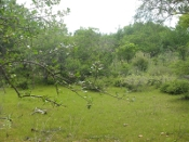 Código Florestal: derrota humilhante