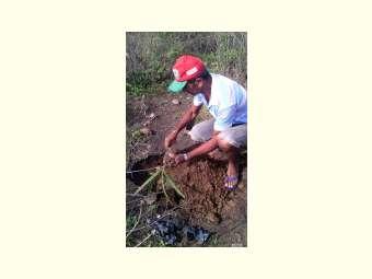 A chuva traz esperança as famílias sertanejas e a oportunidade de contribuir com recuperação da Caatinga