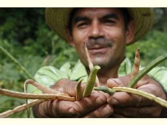 Embrapa e ASA lançam projeto de conservação e valorização das sementes crioulas do Semiárido