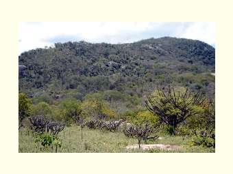Aberto processo seletivo para Curso em Manejo Florestal Sustentável da Caatinga