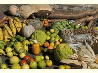 Países devem investir em inovação para a agricultura familiar, alerta FAO