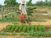 Agricultores participam de seminário sobre fortalecimento da economia familiar