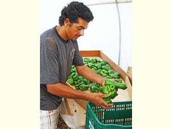 Práticas e manejo na agricultura familiar contribuem para conservação dos alimentos