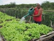 Eventos Discutem Propostas de Agricultura  Agroecológica na Bahia