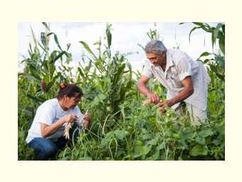 Produção diversificada e acesso a políticas públicas garantem autonomia para famílias agricultoras, revela estudo