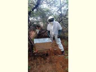 Ações de Assessoria Técnica contribuem para fortalecimento da apicultura Familiar