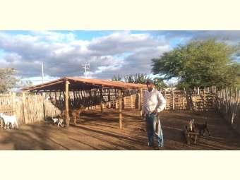 Constru??o de apriscos e processos formativos contribuem para melhoria na caprinovinocultura