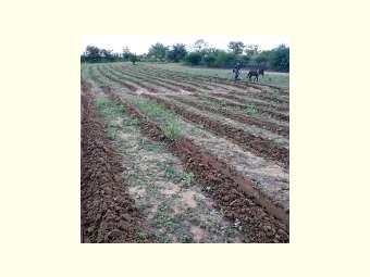 Comunidades da área de sequeiro aproveitam período chuvoso para plantar forragens