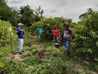 Assentamento em Pernambuco decide apostar na transição agroecológica