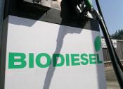 Agrodiesel - o perigo para a saúde