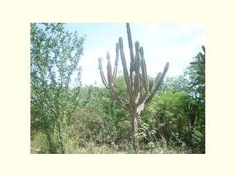 28 de abril - Dia da Caatinga: degradação e ameaças ainda são constantes ao bioma