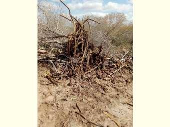 Comunidades Tradicionais de Fundo de Pasto de Canudos denunciam destruição causada à Caatinga