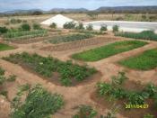 Terra, Água e Segurança Alimentar: elementos essenciais para a Convivência com o Semiárido