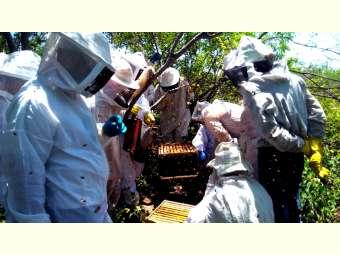 Integrantes do Projeto Bahia Produtiva participam de dia de campo sobre manejo de enxames em Casa Nova