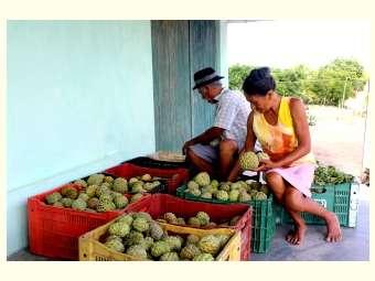 Potencial para fruticultura é destaque no Semiárido de Alagoas