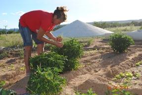 Agricultores/as apontam caminhos para lidar com a seca