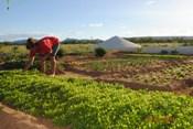 Famílias da caatinga investem na produção de frutas e hortaliças