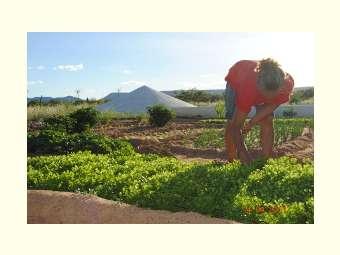 Oficina avalia projeto em andamento com agricultores dos nove estados do Semiárido