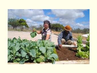 ONU reforça a importância da agricultura familiar para o mundo