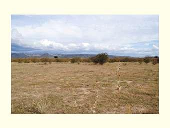 Criada a Política de Combate à Desertificação
