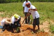 Comunidade de Fartura se anima com o plantio de espécies da caatinga