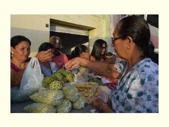 Produção diversificada surpreende participantes de Feira da Agricultura Familiar em Campo Alegre de Lourdes