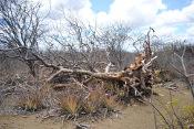 Dia Nacional da Caatinga:  dados mostram necessidade de preservação do Bioma