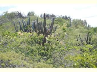 Travada no Congresso, PEC torna Caatinga e Cerrado patrimônio nacional