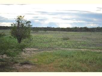 Comunidades de Campo Alegre de Lourdes denunciam grilagem de terra que pode envolver quase 50 mil hectares