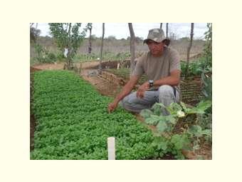 Terra, água, conhecimento e união melhoram a qualidade de vida de família sertaneja