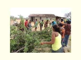No Ano Internacional da Agricultura Familiar é necessário visibilizar o trabalho das mulheres do campo