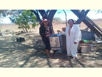 Mãe e filha investem em atividade apícola e aumentam produção de mel em Remanso, na Bahia