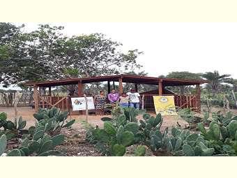 Família de agricultores desenvolve novas estratégias na propriedade e aumenta criação de caprinos e ovinos em Caém, na Bahia