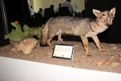 Fauna da Caatinga é exposta em museu