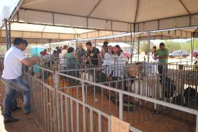 Mesmo em período de estiagem, Cacimba do Silva afirma experiência positiva com caprinovinocultura