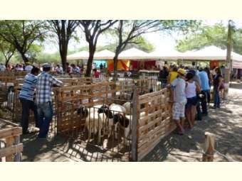 Produtores/as demonstram a riqueza da Caatinga para a sustentabilidade da produção na VII feira de Caprinos e Ovinos de Massaroca