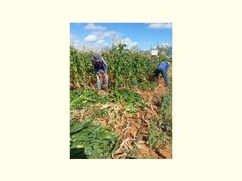 Produção de alimento para o rebanho é estratégia de economia e sustentabilidade
