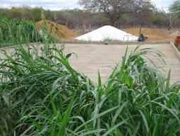 Água de cisterna assegura cultivo de forragens para a criação