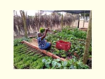Quintais produtivos de agricultores familiares são fomentados pelo Pró-Semiárido