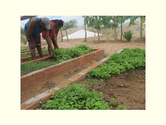 Cisternas de enxurrada garantem produção agrícola com água de chuva em comunidades Fundo de Pasto de Uauá