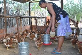 Comunidade rurais de Juazeiro investem na criação de galinhas