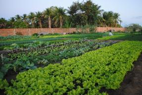 Horta Comunitária do João Paulo II, em Juazeiro, comprova viabilidade da agricultura orgânica na região