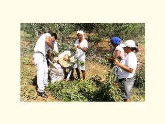 Participação feminina é destaque na produção de Feno em Uauá - BA