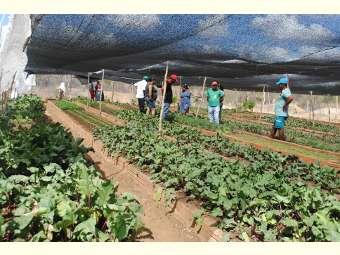 Comunidade Fundo de Pasto de Abaré comemora um ano mantendo Horta Comunitária com água de chuva