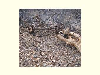 Desmatamento silencioso da Caatinga tem intensificado a desertificação do semiárido brasileiro. Entrevista especial com Iêdo Bezerra de Sá