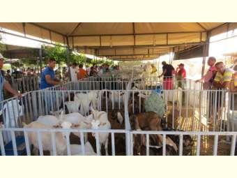 VI edição da Feira de Caprinos e Ovinos de Itamotinga inclui novas potencialidades da Agricultura Familiar local