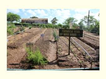 Escola em Arapiraca (AL) vai fornecer medicamentos fitoterápicos para rede municipal do SUS