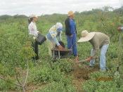 Projeto Recaatingamento: Comunidade de Curral Novo inicia plantio de mudas